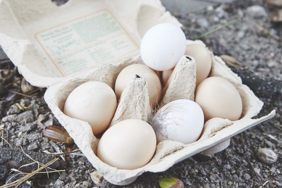 Seit 2015 gibt es täglich frische Eier von glücklichen Hühnern in Camphill Alt-Schönow